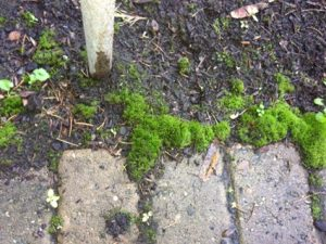 Hard Surface And Roof Moss Removal With Moss Melt